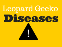 Common Leopard Gecko Diseases & Symptoms